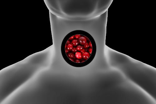 Food to nurture Thyroid Health
